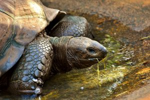 Escape the Winter, Warm Places, Galapagos Islands