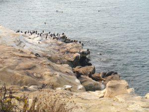 Seal Rock Reserve