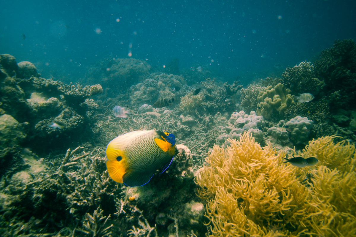 Great Barrier Reef, Diving, Fishes, Underwater World