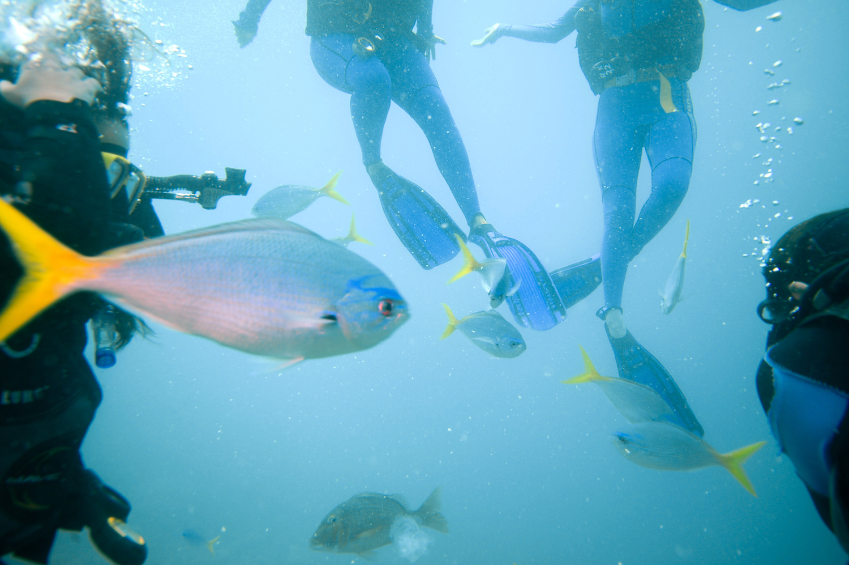 Great Barrier Reef, Diving, Underwater, Ocean, Fishes