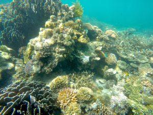 Ocean, Reef