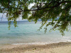 Cebu, Philippines, Itinerary, Beach, Tree