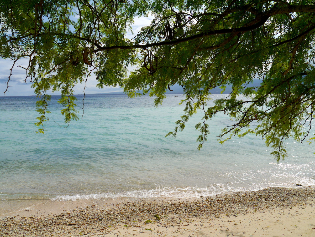 Cebu, Philippines, Itinerary, Beach, Tree
