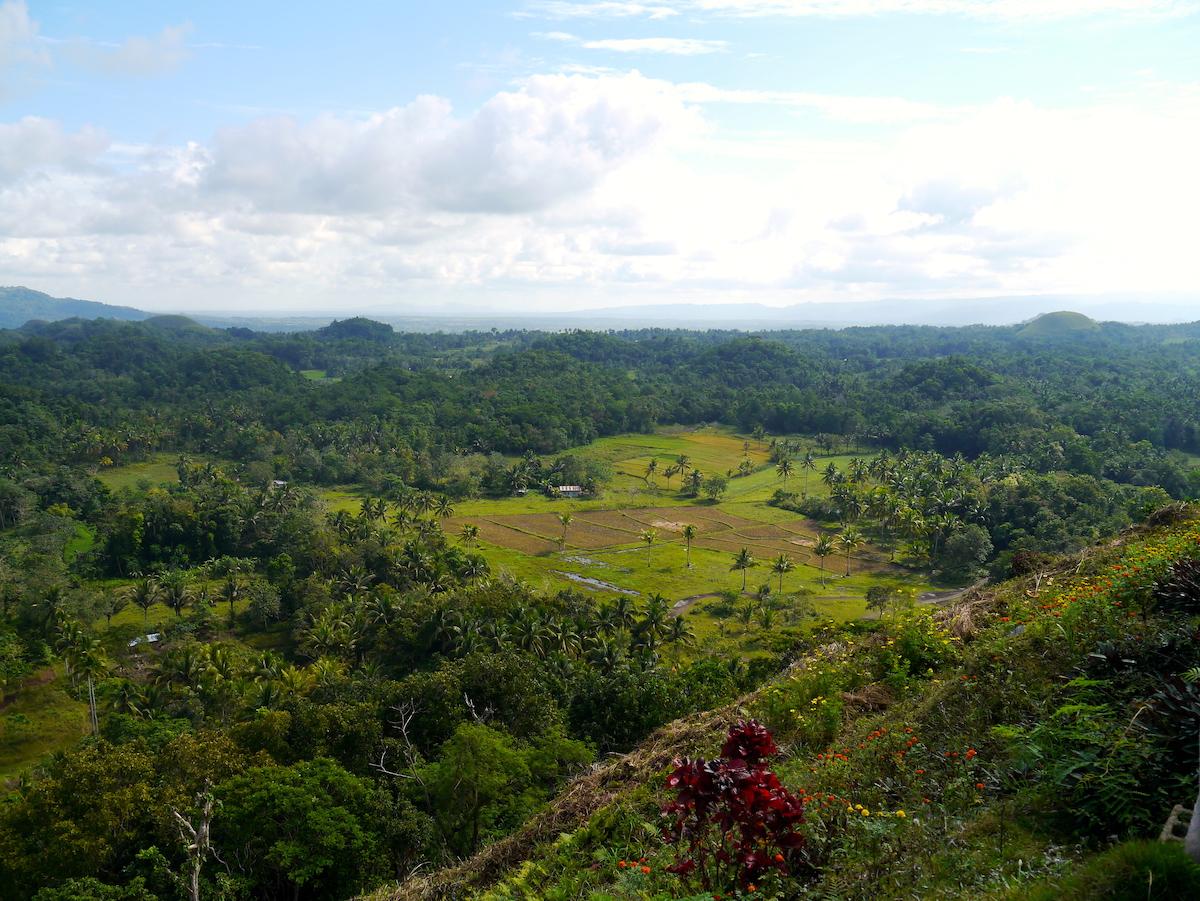 Rice Fields, Bohol