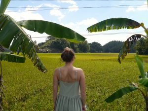 Watching the Rice Fields