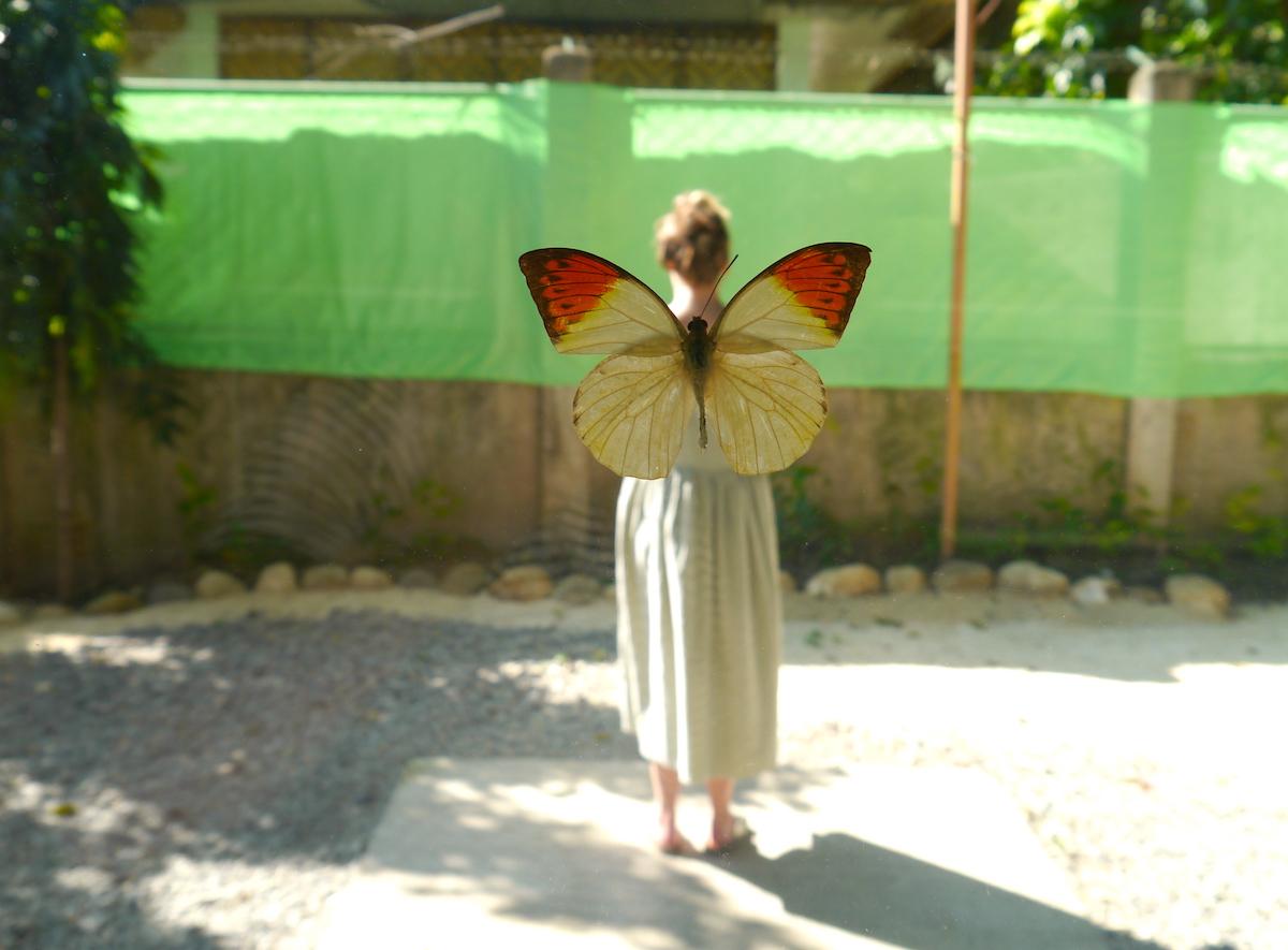 Bohol, Butterfly Farm