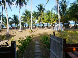 Villa Verde Safari, Palm Trees