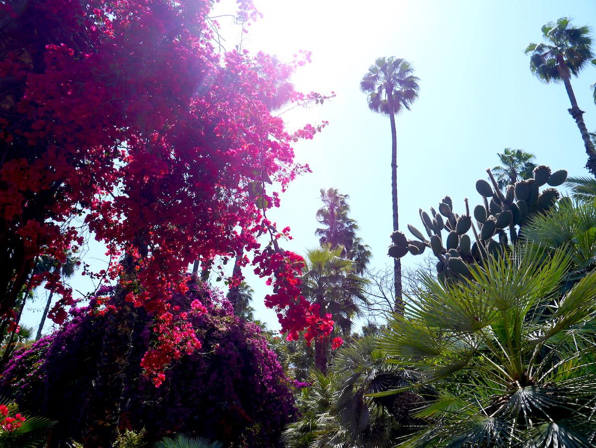 Le Jardin Majorelle, Garden