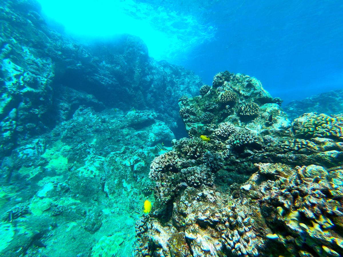 Snorkeling, Underwater, Maui 5 day itinerary