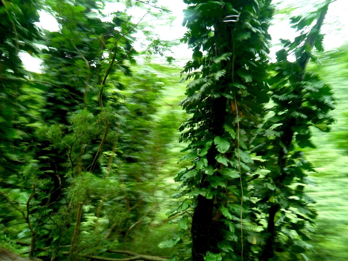 Rainforest, Maui 5 day itinerary