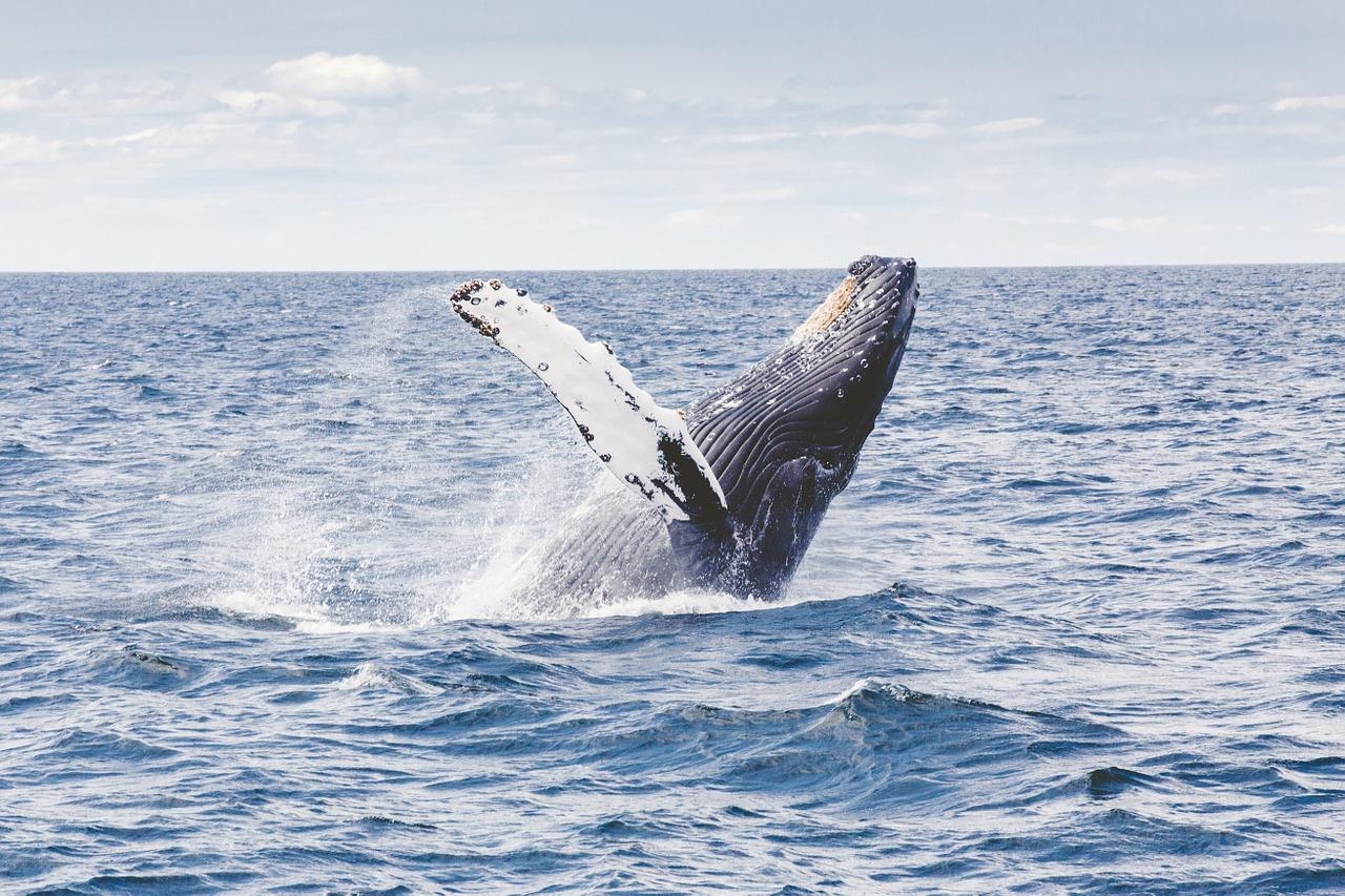 Whale Watching, Maui 5 day itinerary