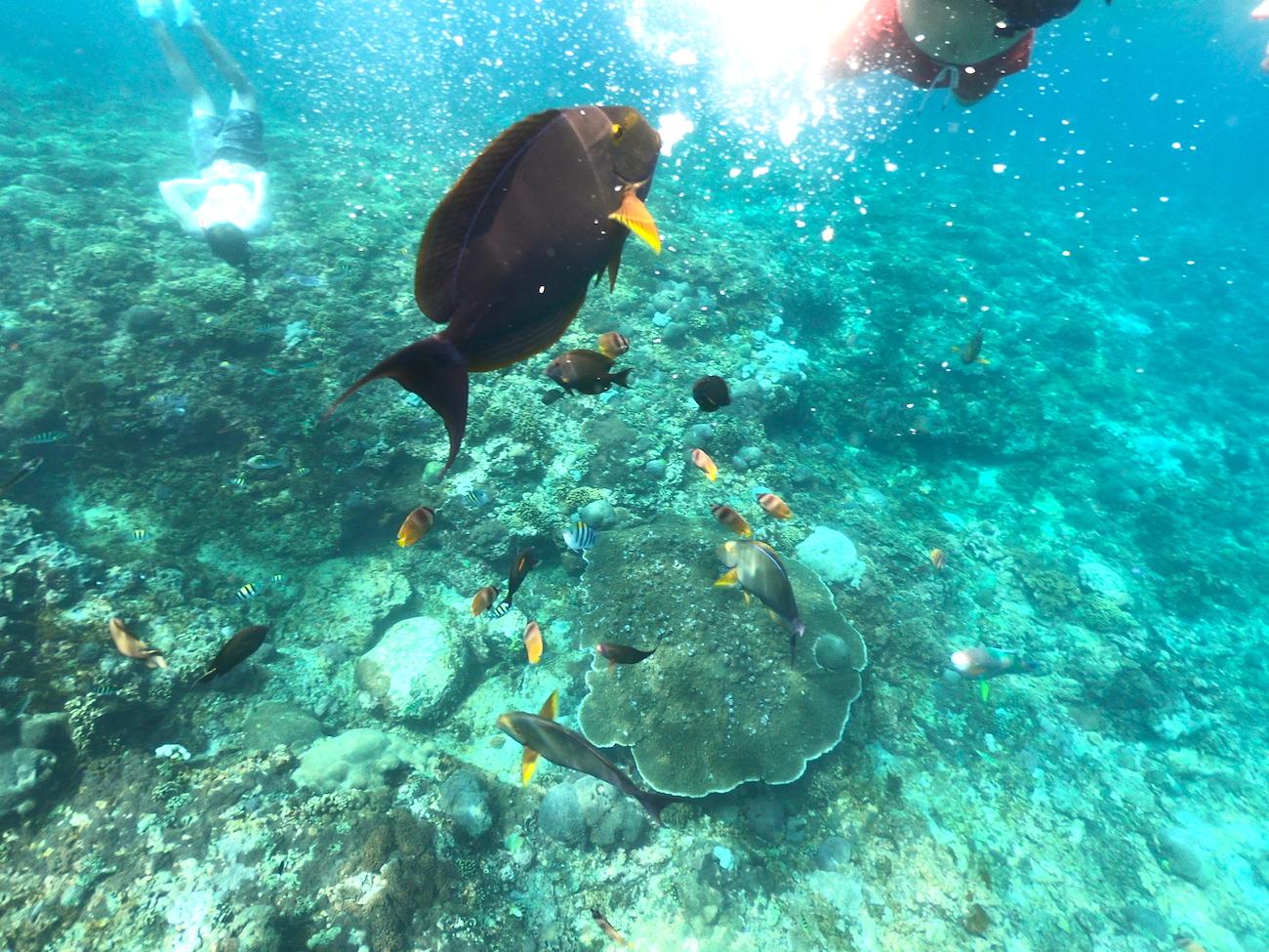 Nusa Penida, snorkling